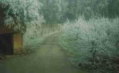 https://www.obst-fuchs.at/data/image/thumpnail/image.php?image=183/obstbau_fuchs_geschichte_winter_article_3420_1.jpg&width=400